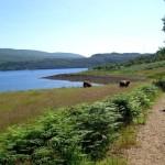 Walk along Loch Goil