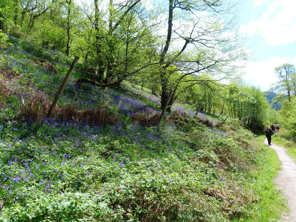 Bluebells on Loch Lomond